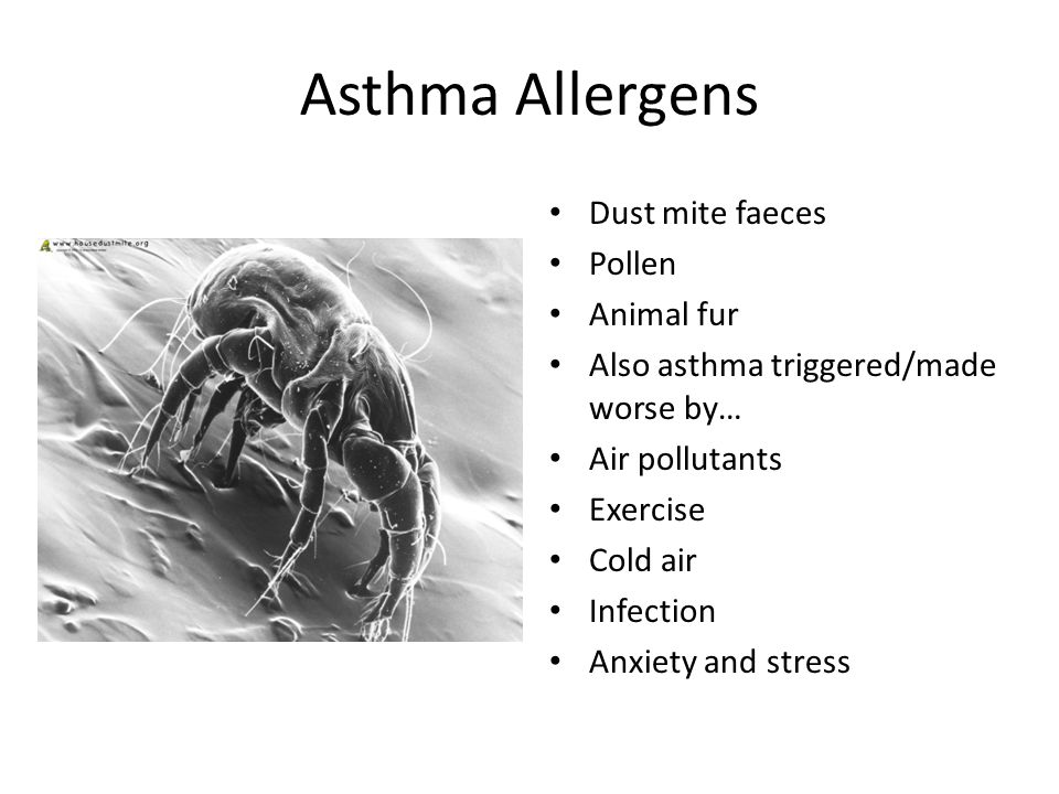 Asthma Allergens Dust mite faeces Pollen Animal fur Also asthma triggered/made worse by… Air pollutants Exercise Cold air Infection Anxiety and stress