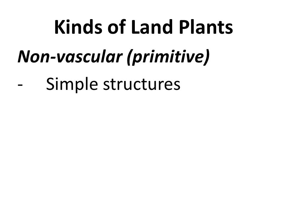 Kinds of Land Plants Non-vascular (primitive) -Simple structures