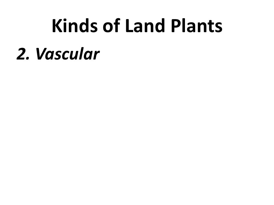 Kinds of Land Plants 2. Vascular
