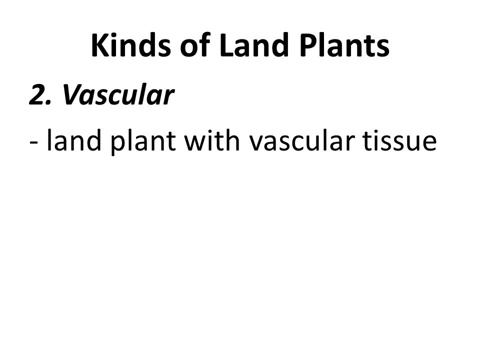 Kinds of Land Plants 2. Vascular - land plant with vascular tissue
