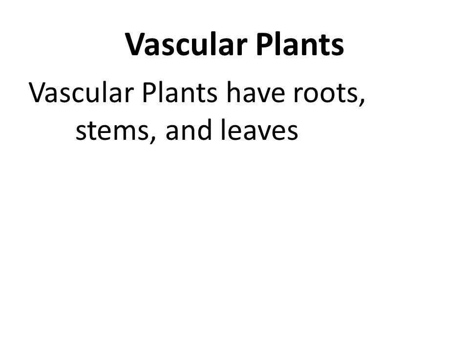 Vascular Plants have roots, stems, and leaves