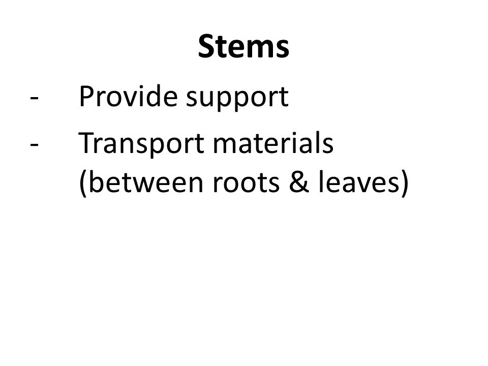 Stems -Provide support -Transport materials (between roots & leaves)