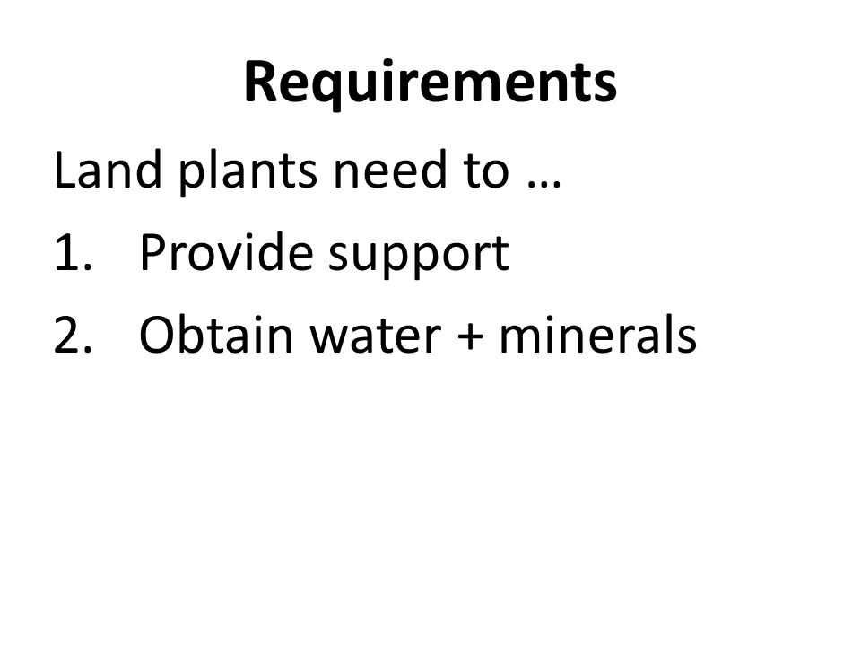 Requirements Land plants need to … 1.Provide support 2.Obtain water + minerals