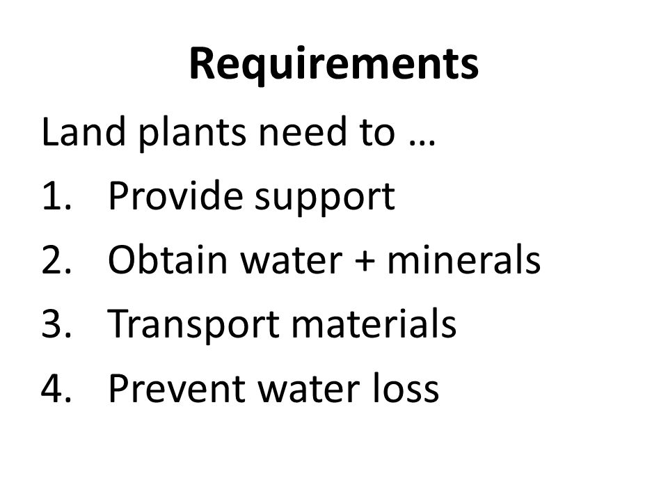 Requirements Land plants need to … 1.Provide support 2.Obtain water + minerals 3.Transport materials 4.Prevent water loss