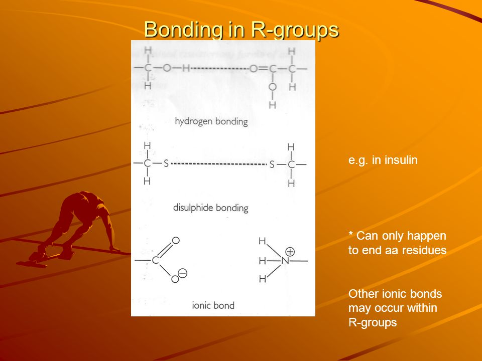 Bonding in R-groups * Can only happen to end aa residues Other ionic bonds may occur within R-groups e.g.