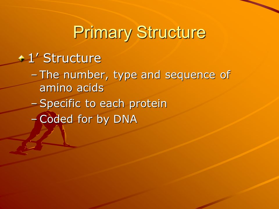 Primary Structure 1' Structure –The number, type and sequence of amino acids –Specific to each protein –Coded for by DNA