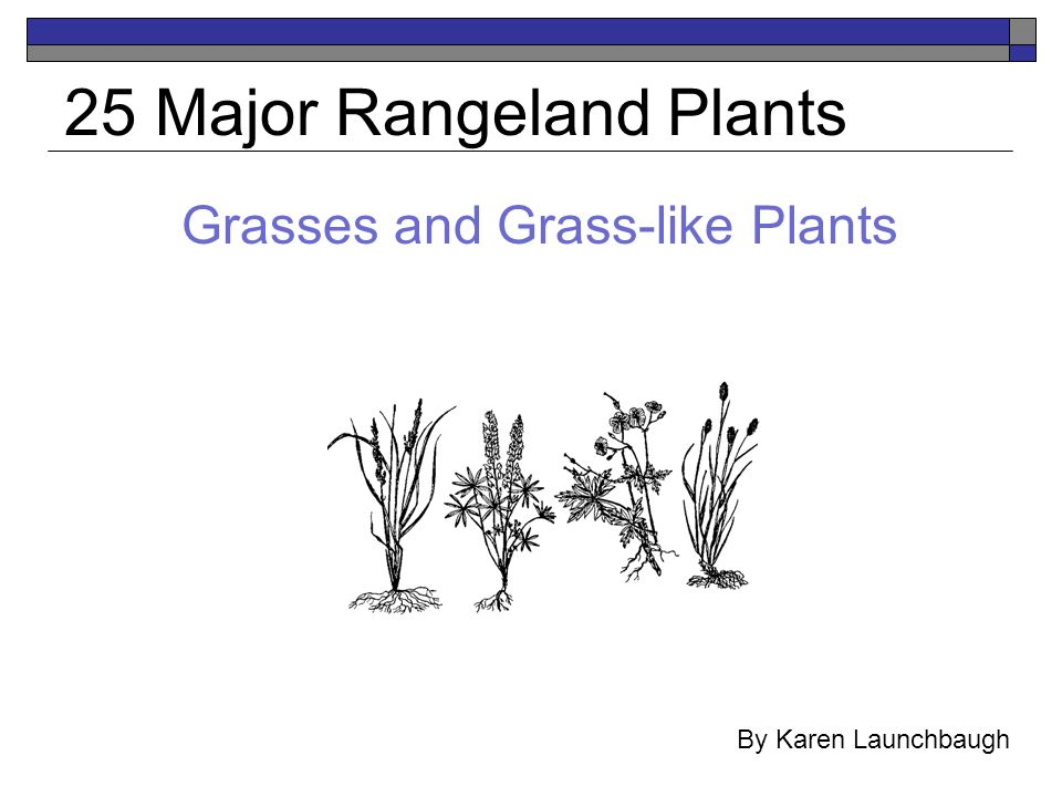 Grasses and Grass-like Plants 25 Major Rangeland Plants By Karen Launchbaugh