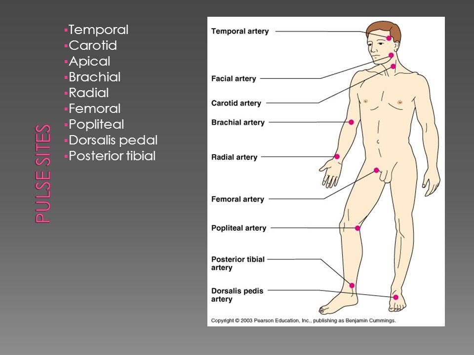  Temporal  Carotid  Apical  Brachial  Radial  Femoral  Popliteal  Dorsalis pedal  Posterior tibial