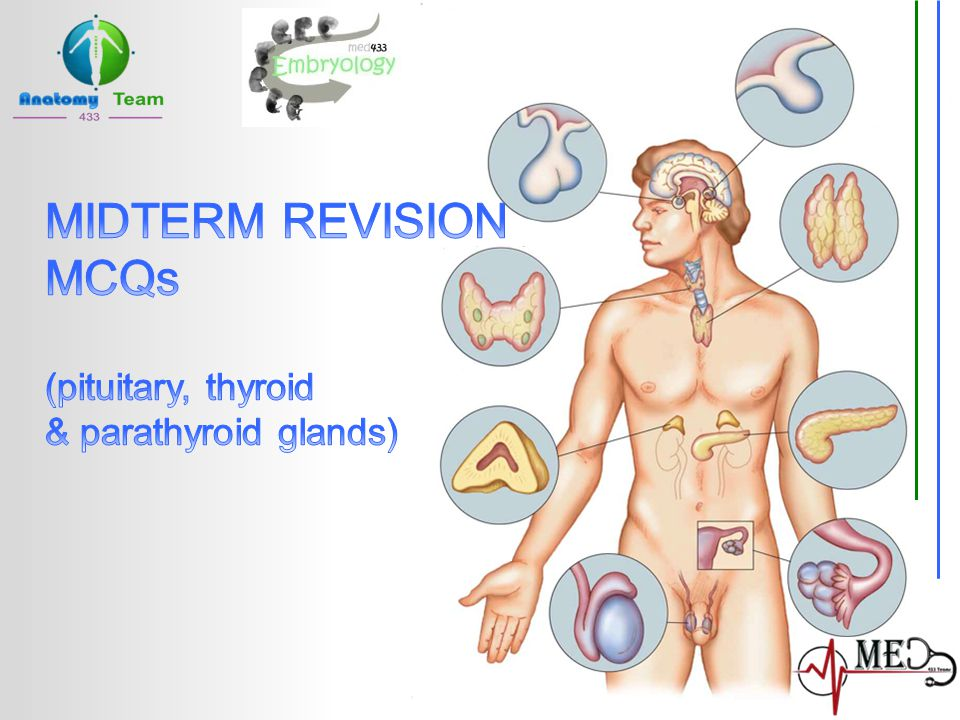 Anatomy team anatomy433@gmail.com After thyroidectomy, the patient complained of horsiness of his voice.