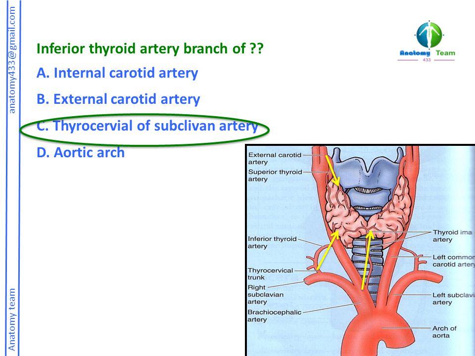 Anatomy team anatomy433@gmail.com Inferior thyroid artery branch of ?? A. Internal carotid artery B. External carotid artery C. Thyrocervial of subcli