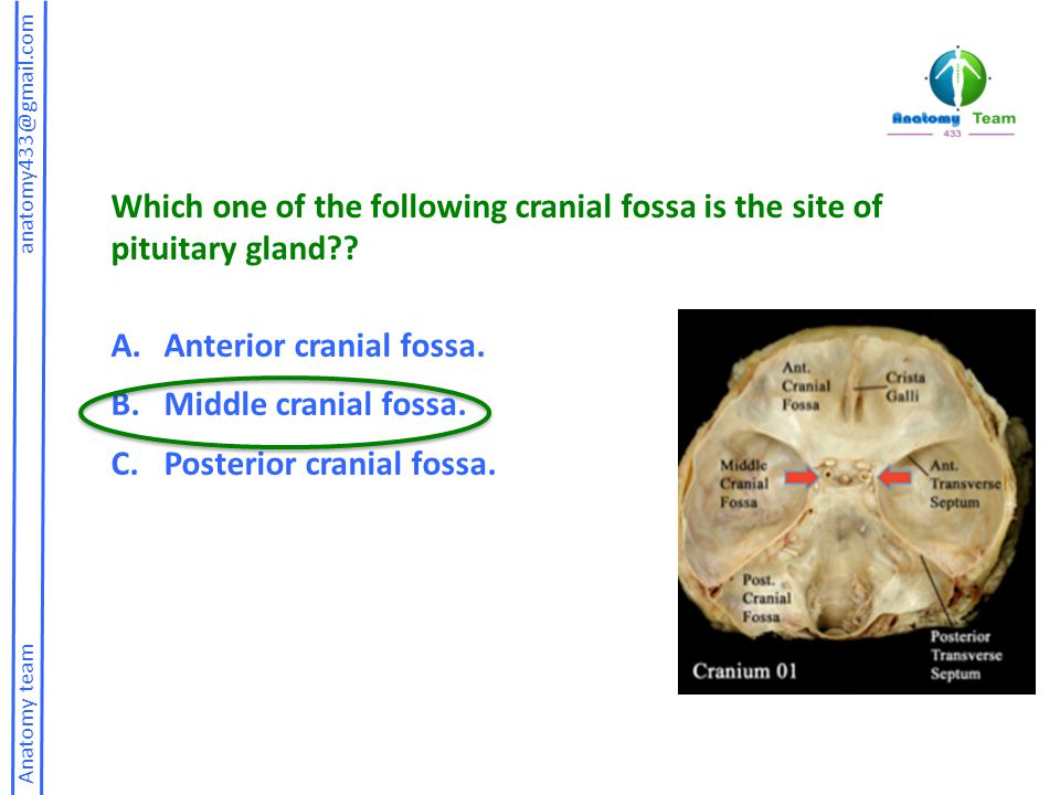 Anatomy team anatomy433@gmail.com Which of the following tracheal cartilage located behind isthmus of thyroid gland: a.