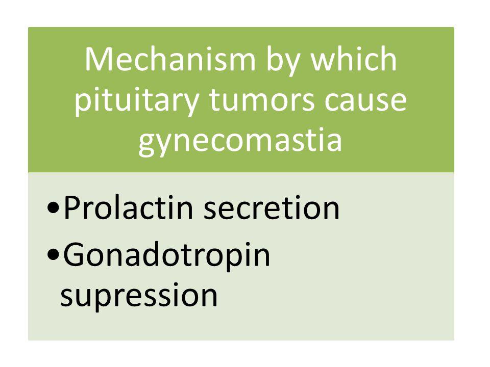 Mechanism by which pituitary tumors cause gynecomastia Prolactin secretion Gonadotropin supression