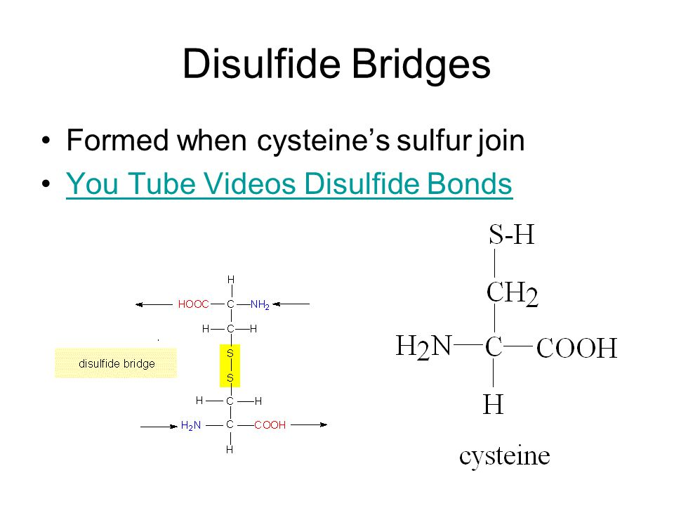 Disulfide Bridges Formed when cysteine's sulfur join You Tube Videos Disulfide Bonds