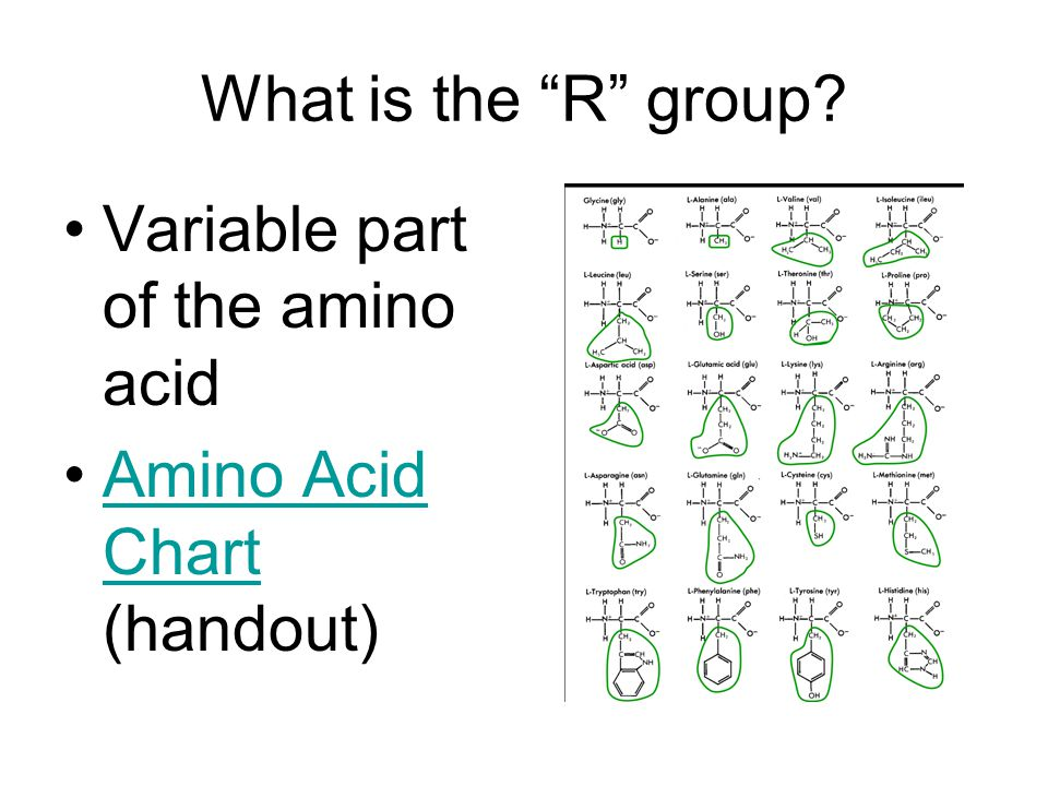What is the R group Variable part of the amino acid Amino Acid Chart (handout)Amino Acid Chart