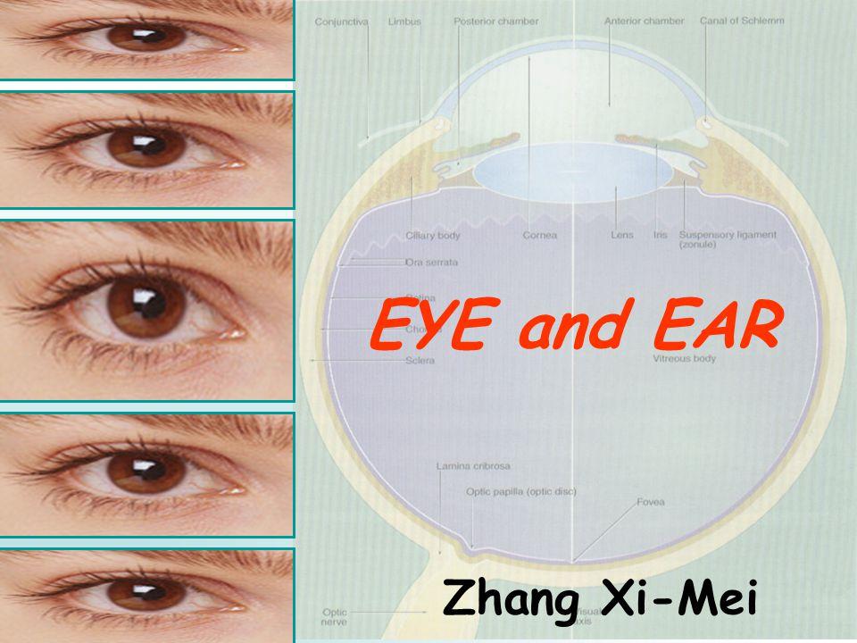 EYE and EAR Zhang Xi-Mei