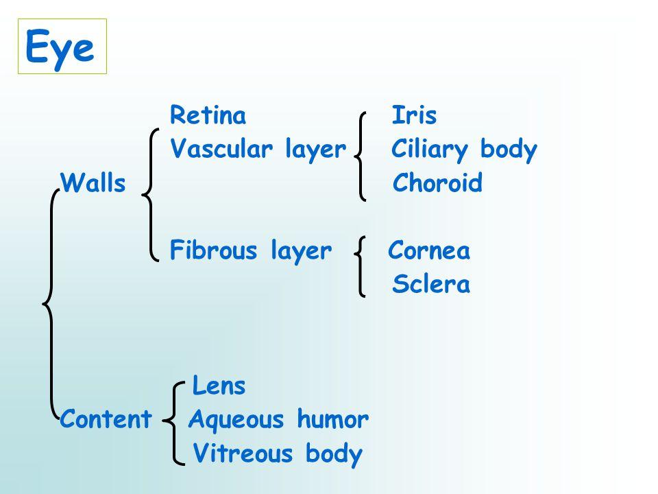 Eye Retina Iris Vascular layer Ciliary body Walls Choroid Fibrous layer Cornea Sclera Lens Content Aqueous humor Vitreous body