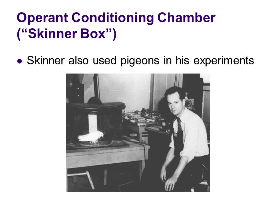 Operant Conditioning Chamber ( Skinner Box ) Skinner also used pigeons in his experiments