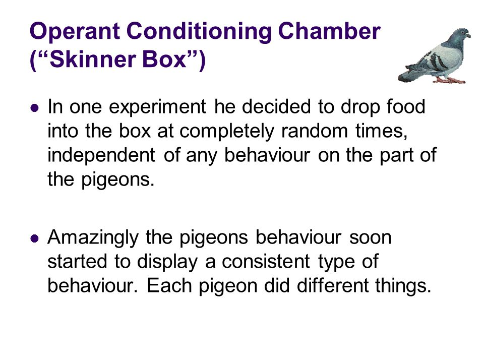 Operant Conditioning Chamber ( Skinner Box ) In one experiment he decided to drop food into the box at completely random times, independent of any behaviour on the part of the pigeons.