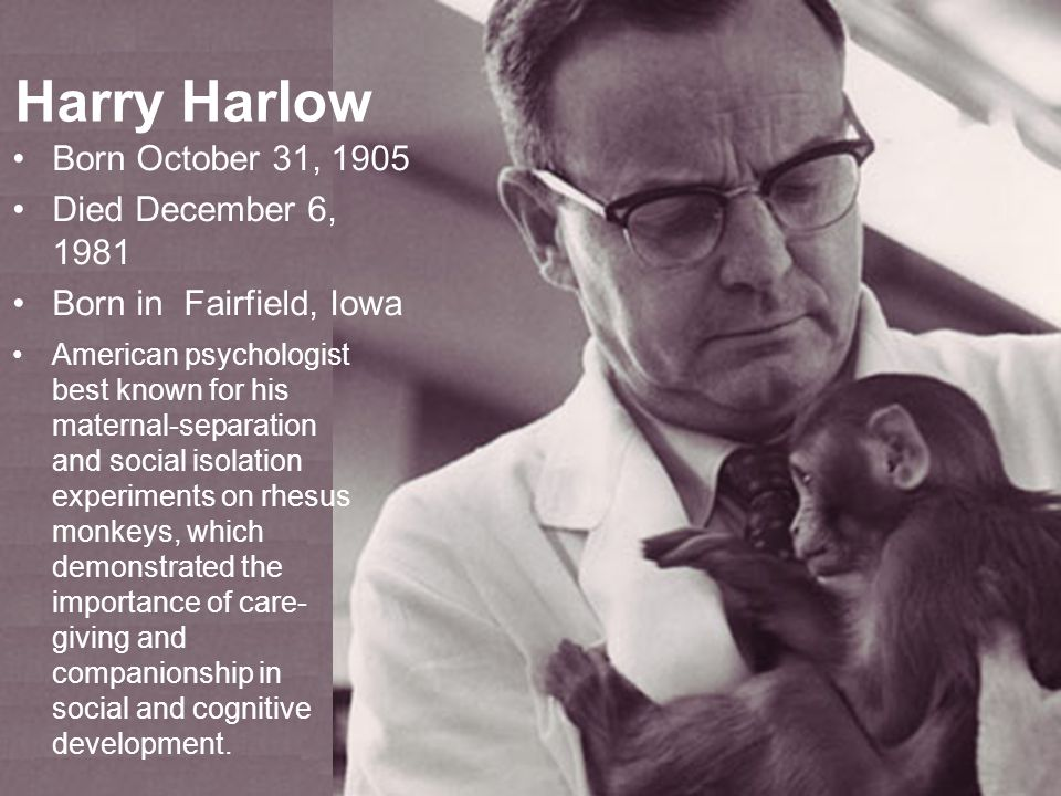 Harry Harlow Born October 31, 1905 Died December 6, 1981 Born in Fairfield, Iowa American psychologist best known for his maternal-separation and social isolation experiments on rhesus monkeys, which demonstrated the importance of care- giving and companionship in social and cognitive development.