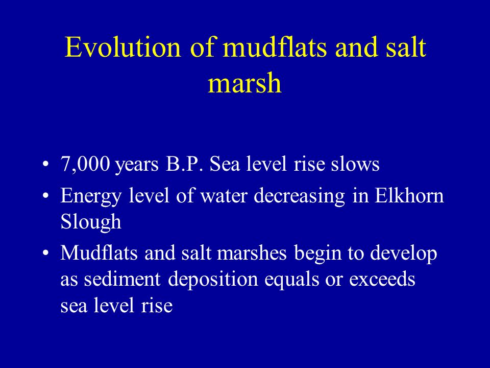 Evolution of mudflats and salt marsh 7,000 years B.P. Sea level rise slows Energy level of water decreasing in Elkhorn Slough Mudflats and salt marshe