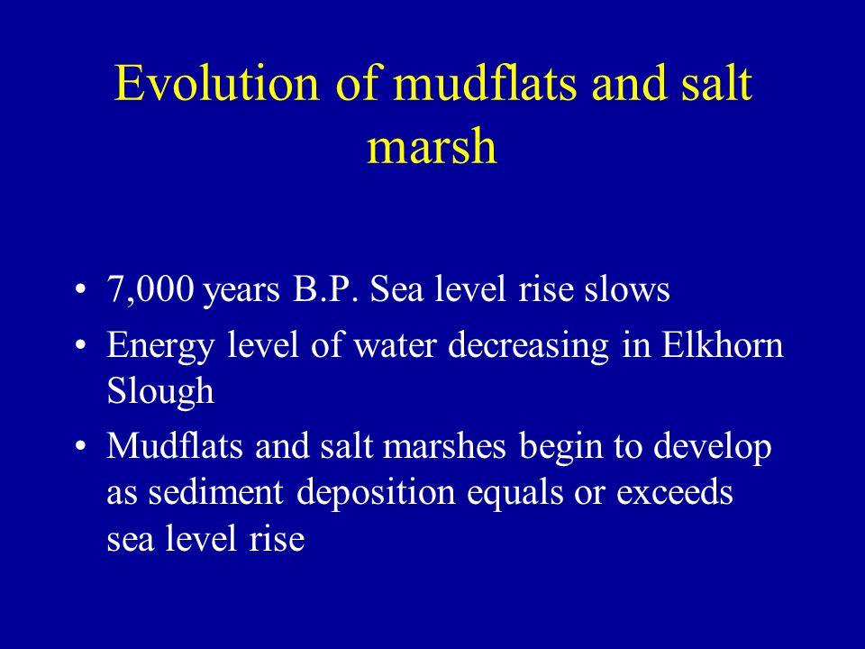 Evolution of mudflats and salt marsh 7,000 years B.P.