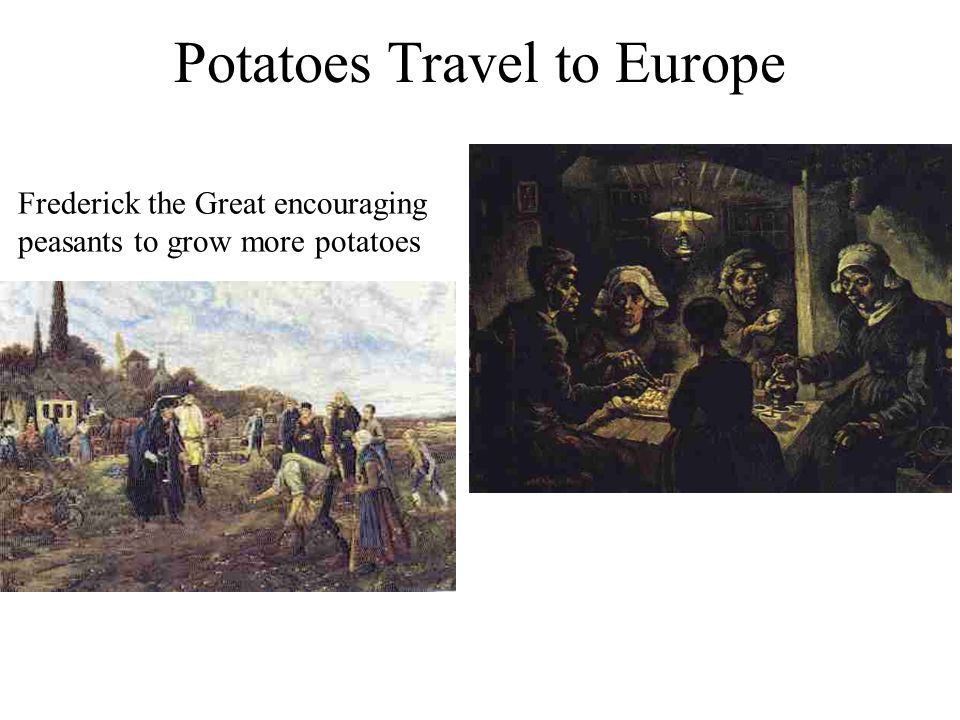 Potatoes Travel to Europe Frederick the Great encouraging peasants to grow more potatoes