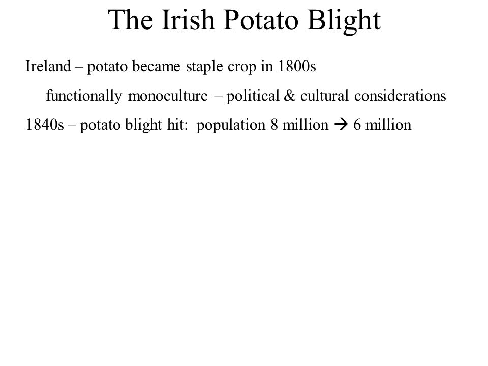 The Irish Potato Blight Ireland – potato became staple crop in 1800s functionally monoculture – political & cultural considerations 1840s – potato bli