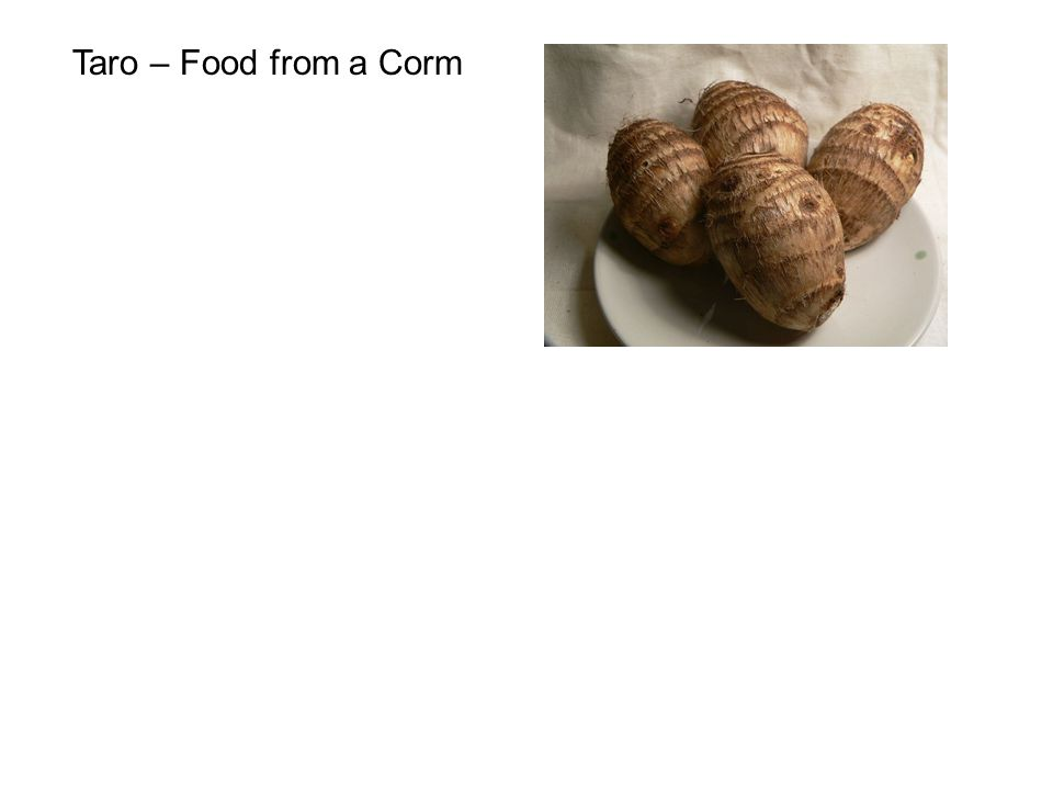 Taro – Food from a Corm