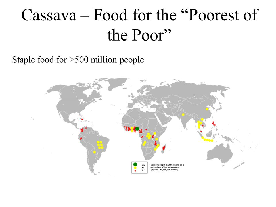 Cassava – Food for the Poorest of the Poor Staple food for >500 million people