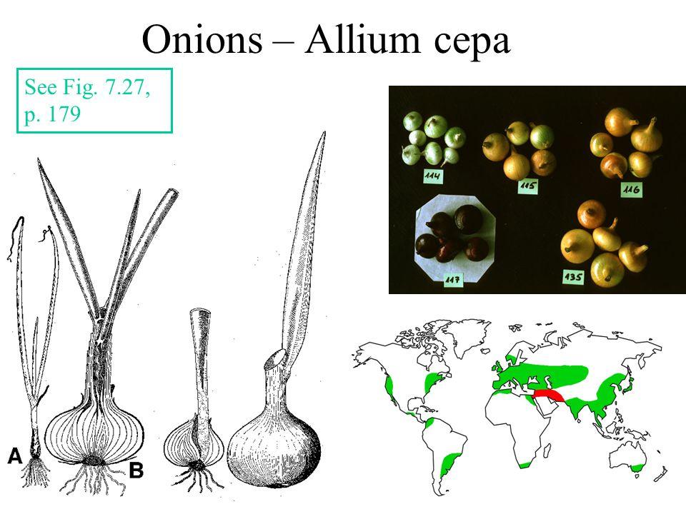 Onions – Allium cepa See Fig. 7.27, p. 179