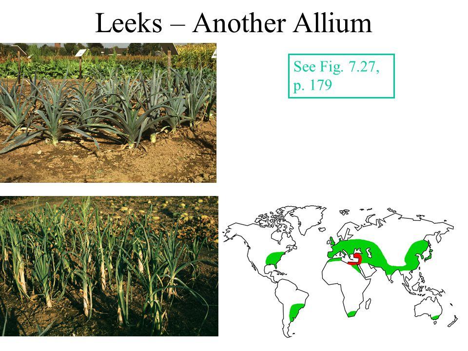 Leeks – Another Allium See Fig. 7.27, p. 179