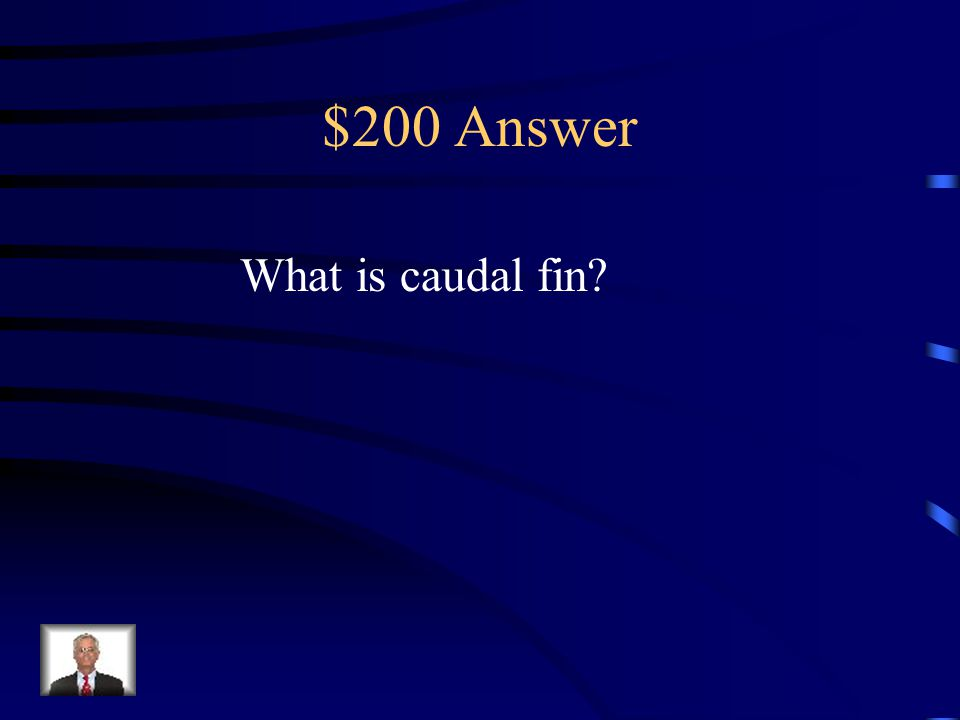 $200 Question Text Features Your Text Here This is what the tail is called.