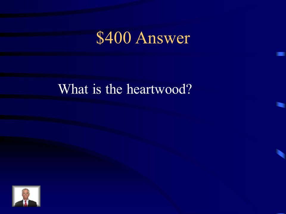 $400 Question Text Features Center part of the trunk.