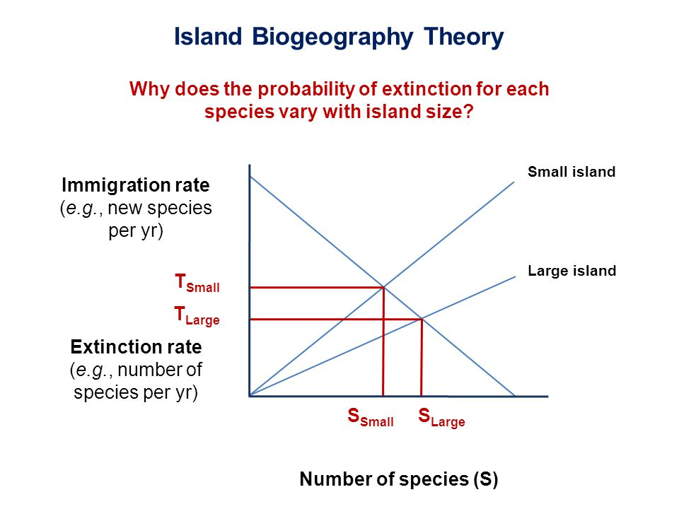 Immigration rate (e.g., new species per yr) Extinction rate (e.g., number of species per yr) Number of species (S) Small island Large island T Small S