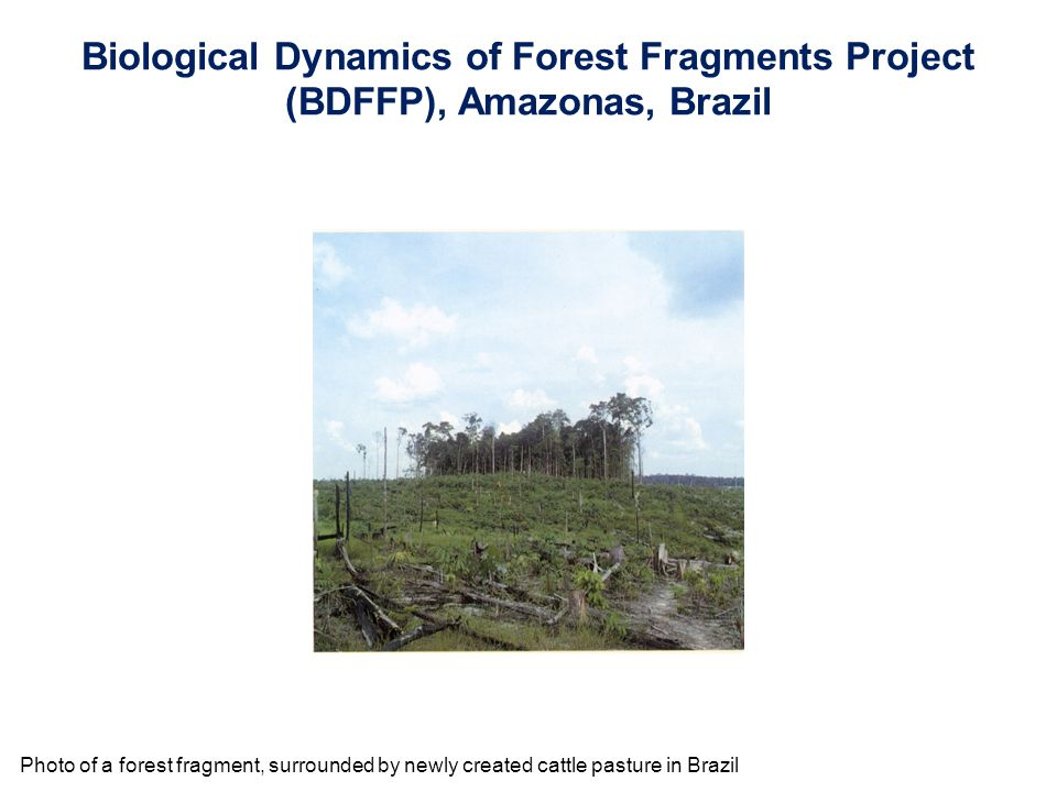 Photo of a forest fragment, surrounded by newly created cattle pasture in Brazil Biological Dynamics of Forest Fragments Project (BDFFP), Amazonas, Br