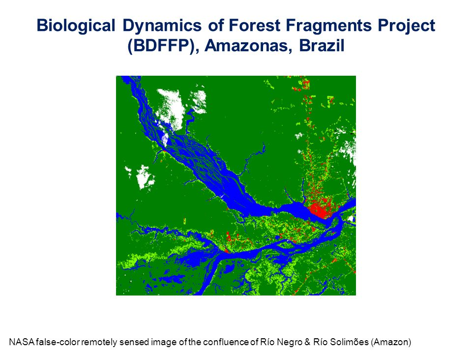 NASA false-color remotely sensed image of the confluence of Río Negro & Río Solimões (Amazon) Biological Dynamics of Forest Fragments Project (BDFFP),