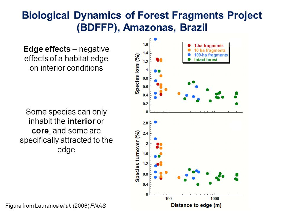 Figure from Laurance et al. (2006) PNAS Edge effects – negative effects of a habitat edge on interior conditions Some species can only inhabit the int