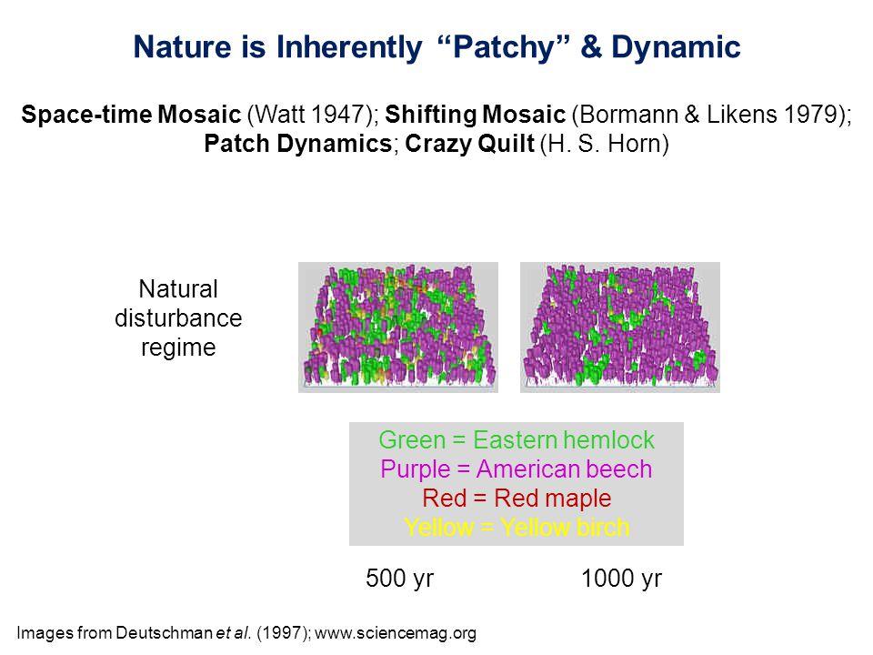Images from Deutschman et al. (1997); www.sciencemag.org Natural disturbance regime 500 yr1000 yr Green = Eastern hemlock Purple = American beech Red