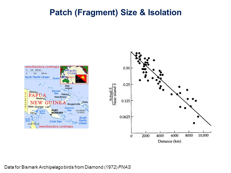 Data for Bismark Archipelago birds from Diamond (1972) PNAS Patch (Fragment) Size & Isolation