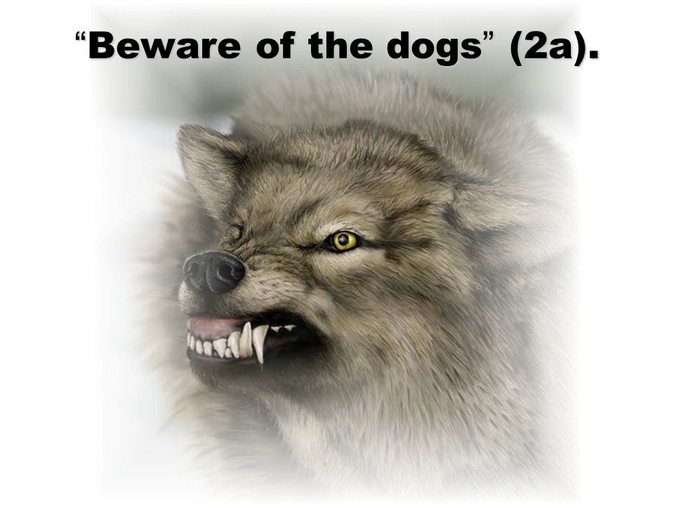 """Beware of the dogs"" (2a)."