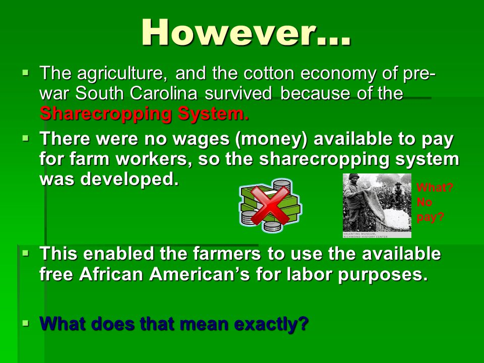 However…  The agriculture, and the cotton economy of pre- war South Carolina survived because of the Sharecropping System.