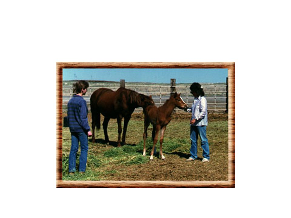 A summer 4-H program makes ranch life real and creates lessons that last a lifetime.