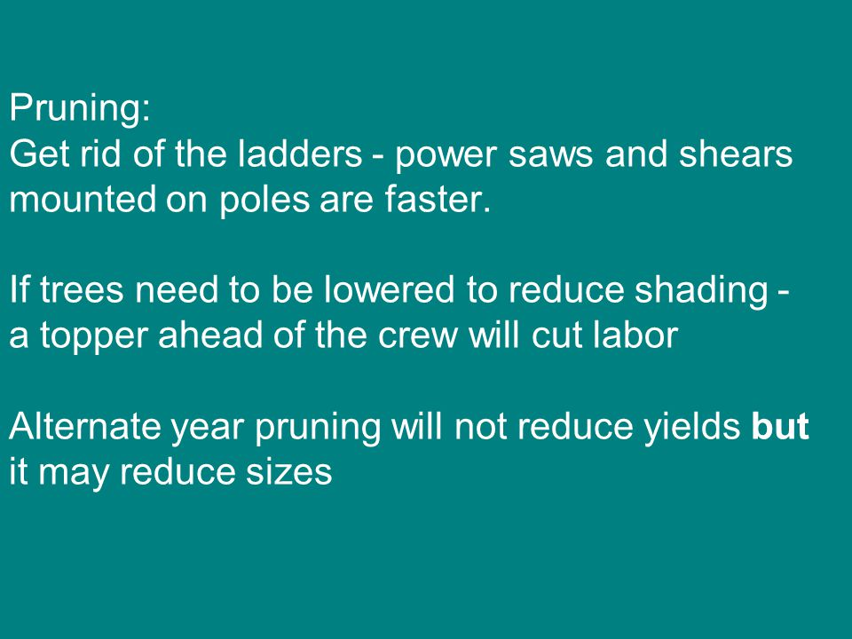 Pruning: Get rid of the ladders - power saws and shears mounted on poles are faster.