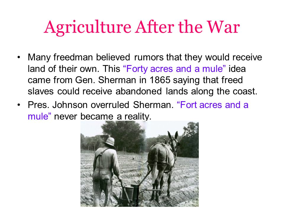 Agriculture After the War Many freedman believed rumors that they would receive land of their own.