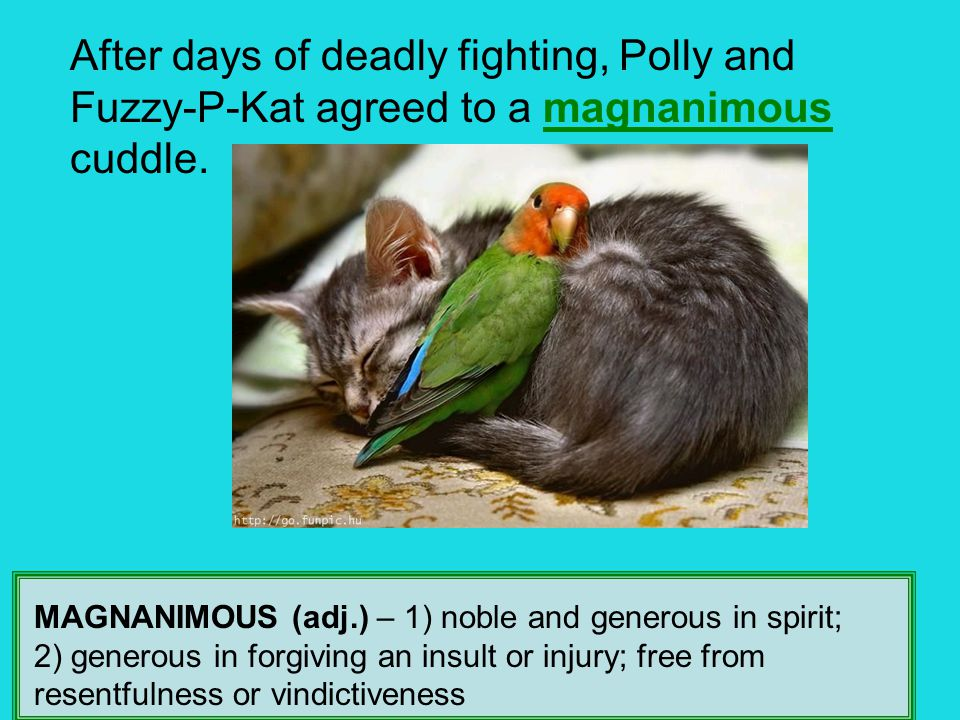 After days of deadly fighting, Polly and Fuzzy-P-Kat agreed to a magnanimous cuddle. MAGNANIMOUS (adj.) – 1) noble and generous in spirit; 2) generous