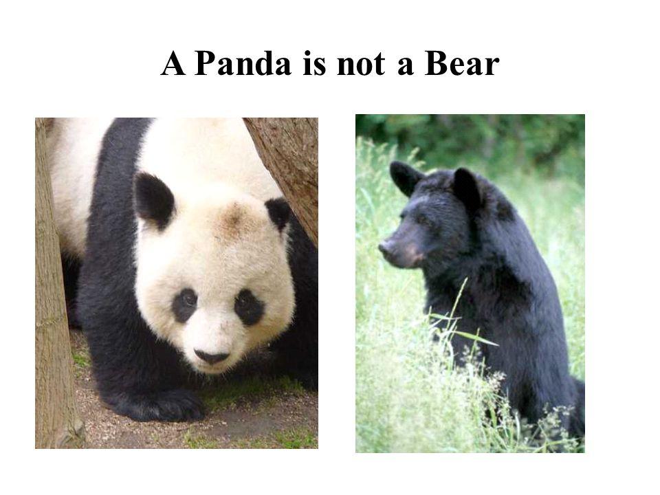 A Panda is not a Bear