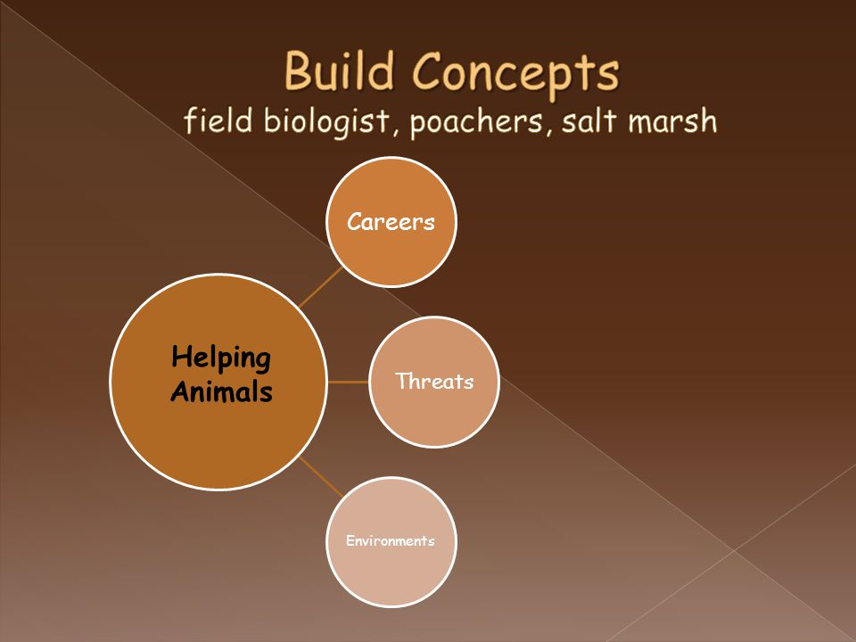 Careers Threats Environments Helping Animals