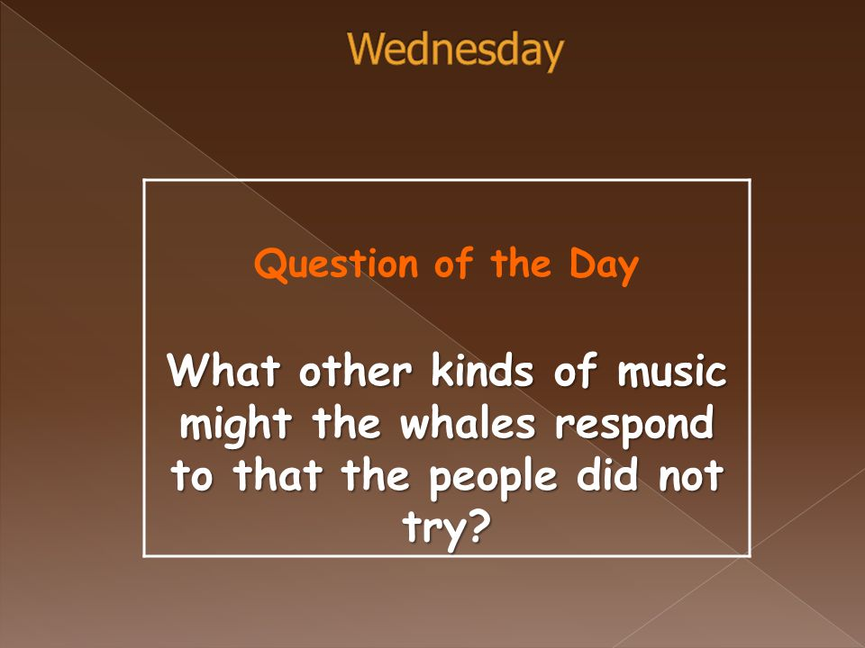 Question of the Day What other kinds of music might the whales respond to that the people did not try?