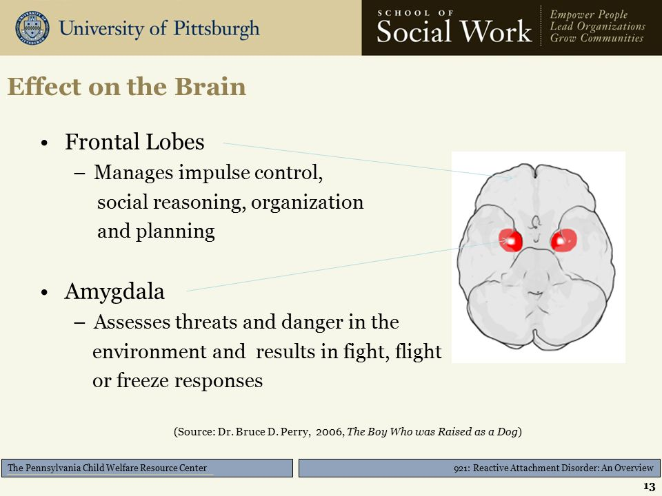 921: Reactive Attachment Disorder: An Overview The Pennsylvania Child Welfare Resource Center Effect on the Brain Frontal Lobes –Manages impulse control, social reasoning, organization and planning Amygdala –Assesses threats and danger in the environment and results in fight, flight or freeze responses (Source: Dr.