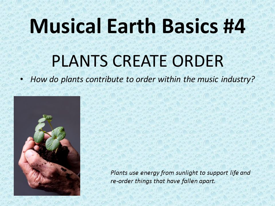 Musical Earth Basics #4 PLANTS CREATE ORDER How do plants contribute to order within the music industry.